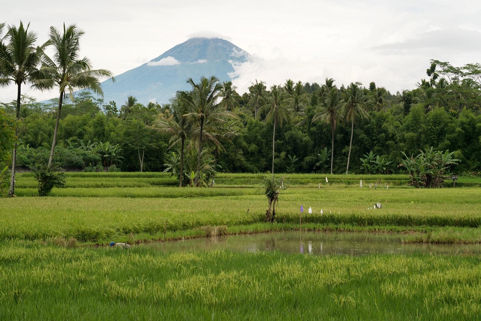 Tour de Indonesian Icon